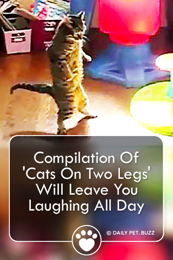 Compilation Of \'Cats On Two Legs\' Will Leave You Laughing All Day