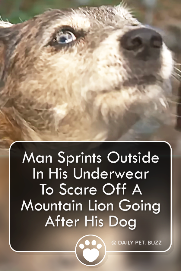 Man Sprints Outside In His Underwear To Scare Off A Mountain Lion Going After His Dog