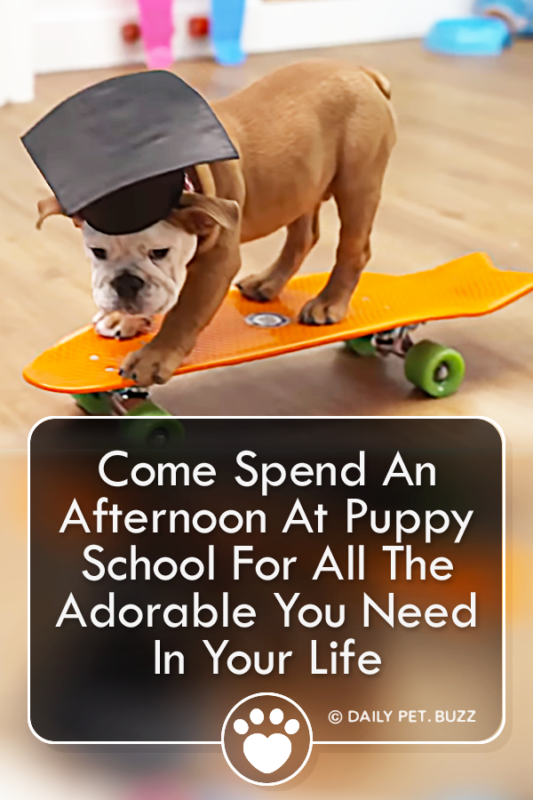 Come Spend An Afternoon At Puppy School For All The Adorable You Need In Your Life