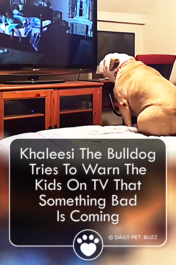 Khaleesi The Bulldog Tries To Warn The Kids On TV That Something Bad Is Coming
