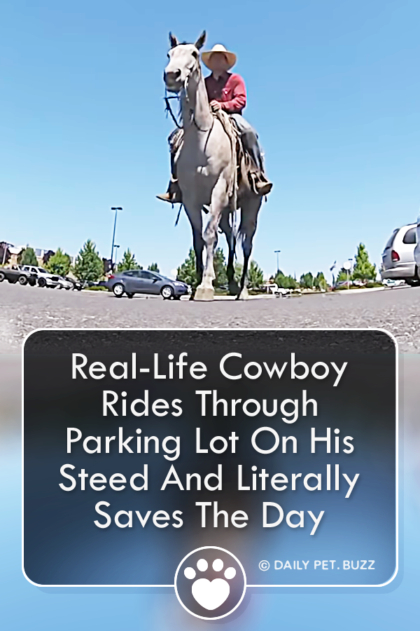 Real-Life Cowboy Rides Through Parking Lot On His Steed And Literally Saves The Day