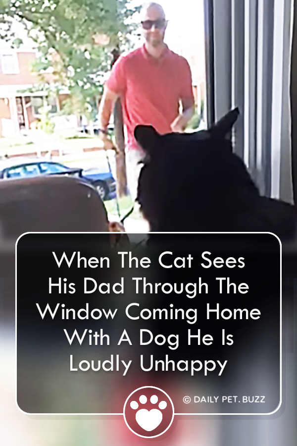 When The Cat Sees His Dad Through The Window Coming Home With A Dog He Is Loudly Unhappy