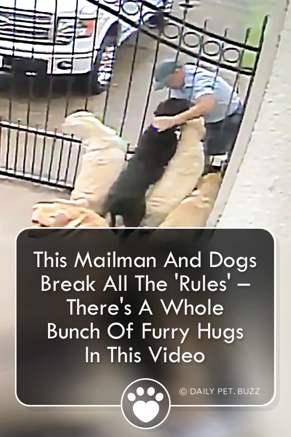 This Mailman And Dogs Break All The \'Rules\' – There\'s A Whole Bunch Of Furry Hugs In This Video