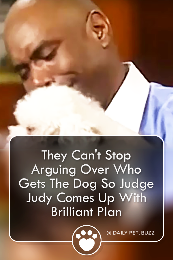 They Can\'t Stop Arguing Over Who Gets The Dog So Judge Judy Comes Up With Brilliant Plan