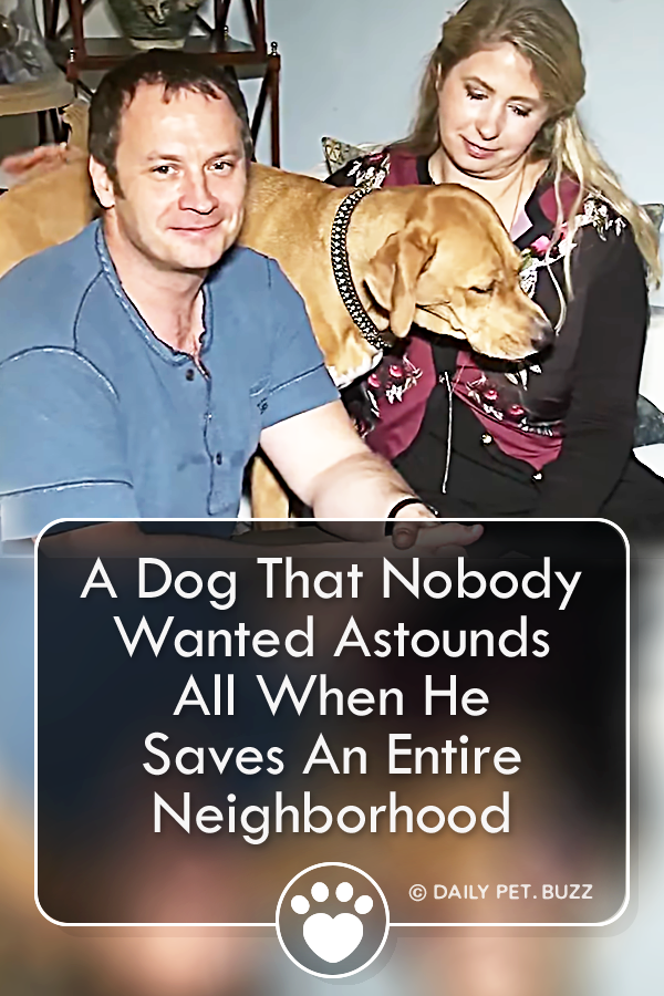 A Dog That Nobody Wanted Astounds All When He Saves An Entire Neighborhood