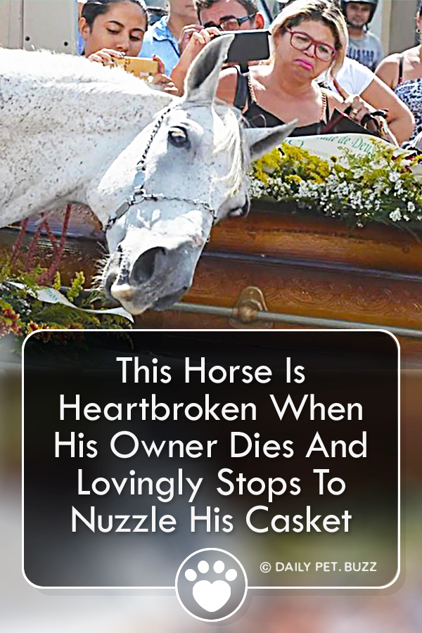 This Horse Is Heartbroken When His Owner Dies And Lovingly Stops To Nuzzle His Casket