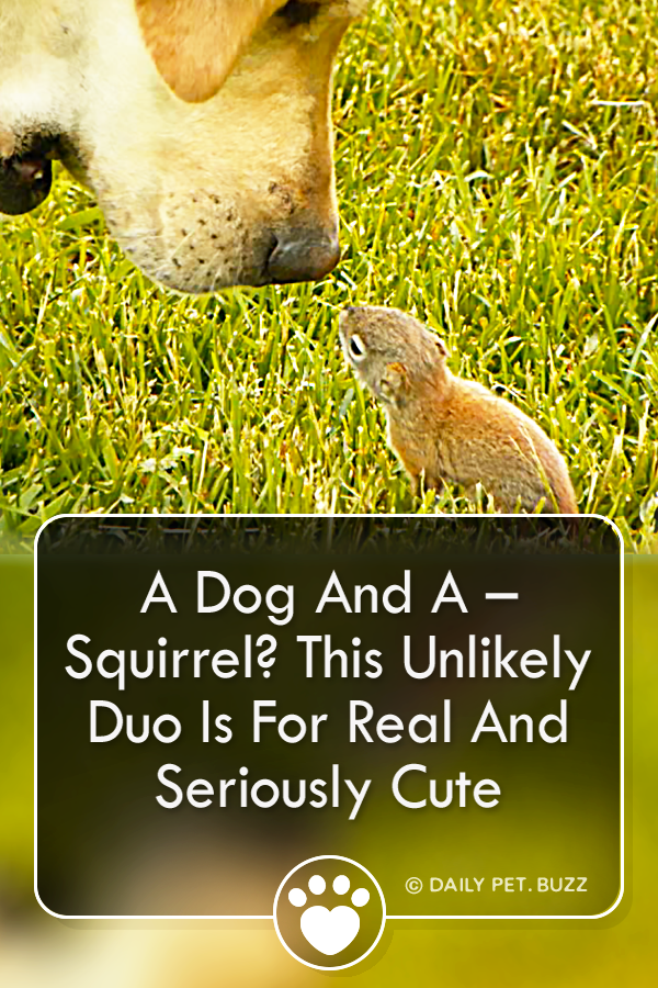 A Dog And A – Squirrel? This Unlikely Duo Is For Real And Seriously Cute