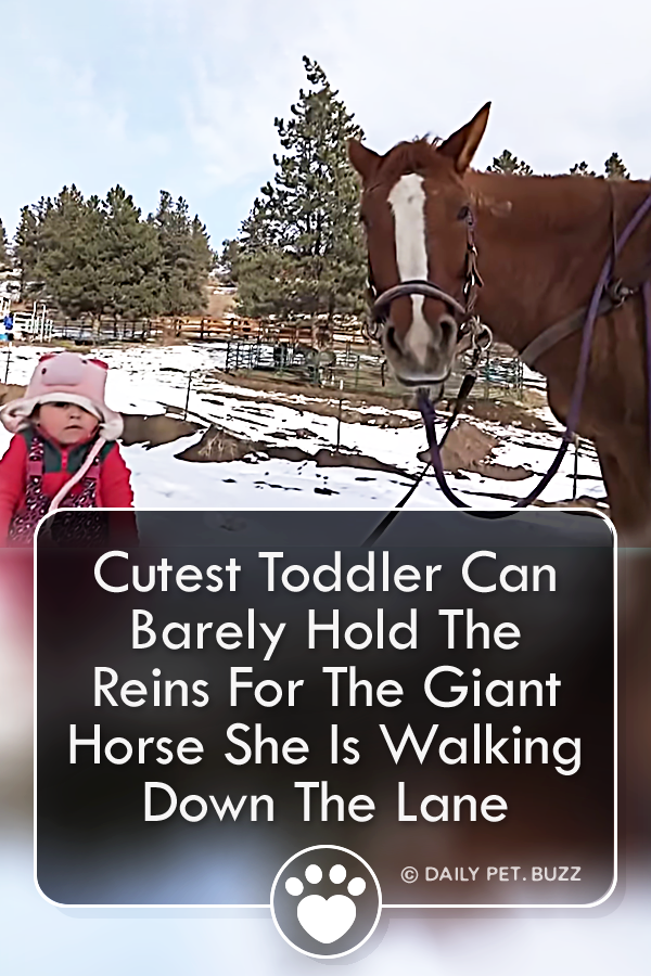 Cutest Toddler Can Barely Hold The Reins For The Giant Horse She Is Walking Down The Lane