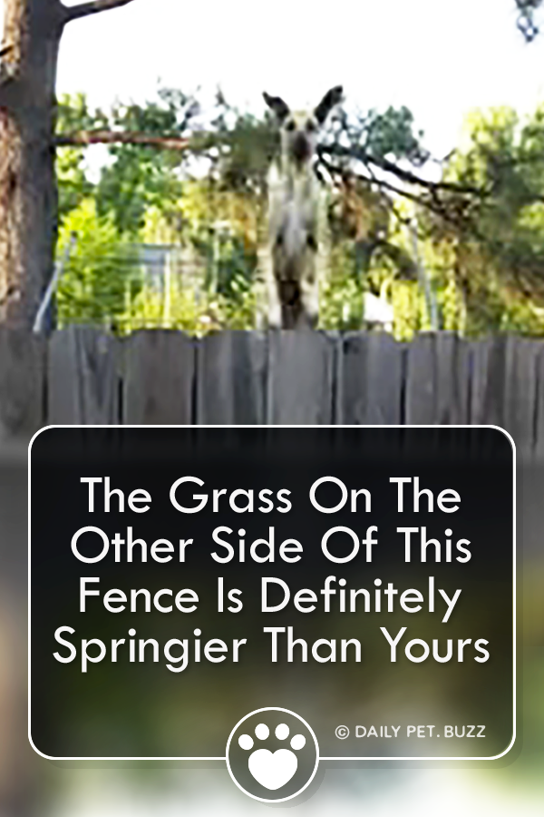 The Grass On The Other Side Of This Fence Is Definitely Springier Than Yours