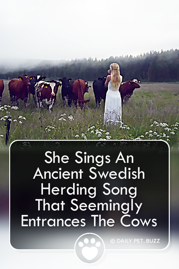 She Sings An Ancient Swedish Herding Song That Seemingly Entrances The Cows