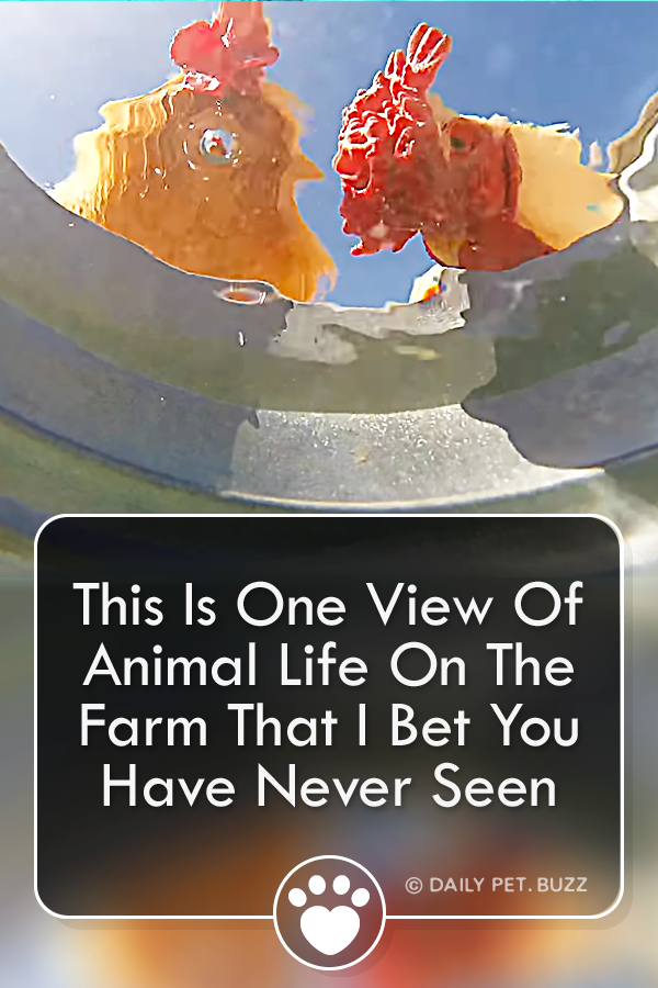 This Is One View Of Animal Life On The Farm That I Bet You Have Never Seen