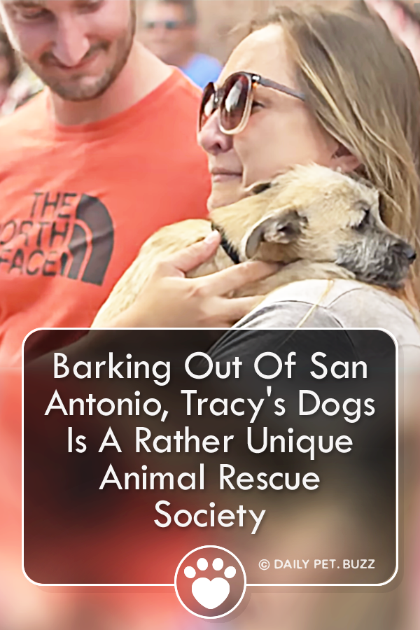 Barking Out Of San Antonio, Tracy\'s Dogs Is A Rather Unique Animal Rescue Society