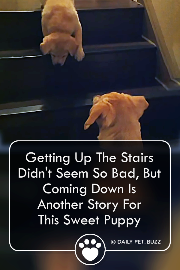Getting Up The Stairs Didn\'t Seem So Bad, But Coming Down Is Another Story For This Sweet Puppy