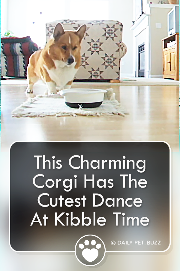 This Charming Corgi Has The Cutest Dance At Kibble Time