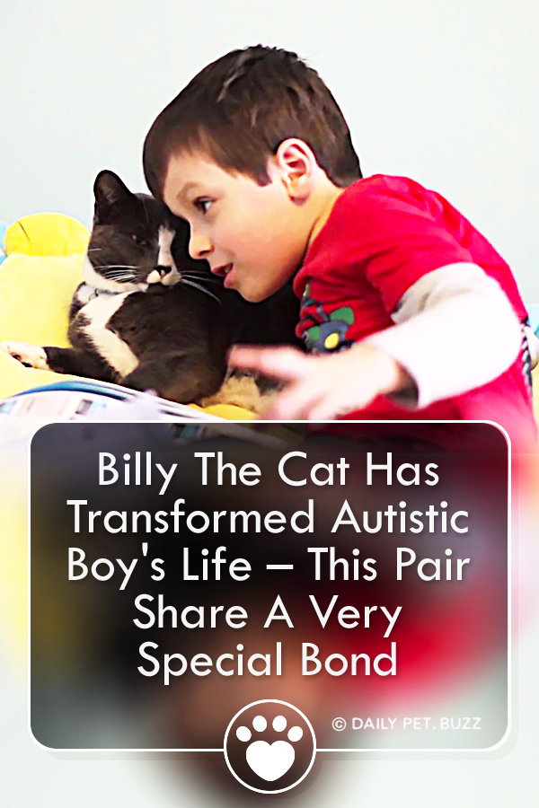 Billy The Cat Has Transformed Autistic Boy\'s Life – This Pair Share A Very Special Bond