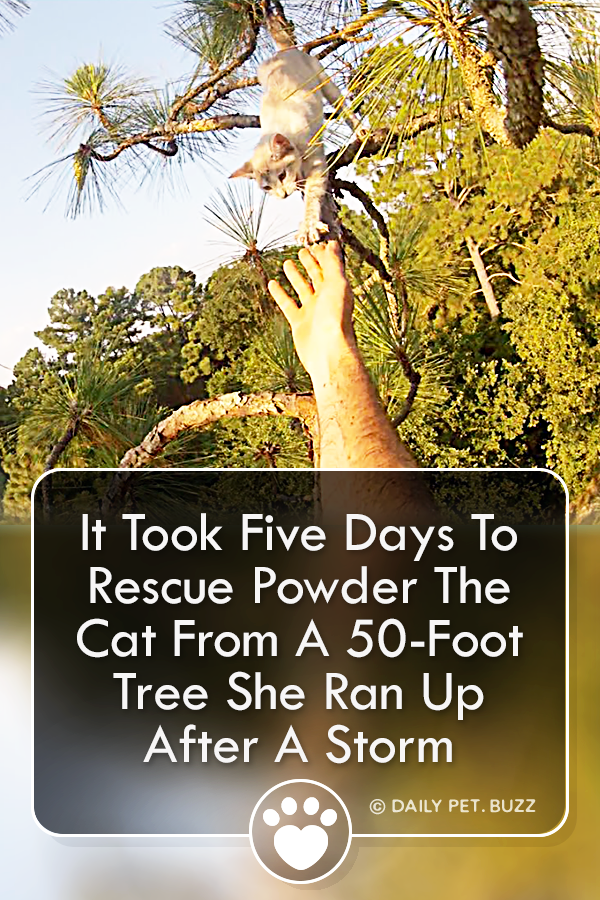 It Took Five Days To Rescue Powder The Cat From A 50-Foot Tree She Ran Up After A Storm