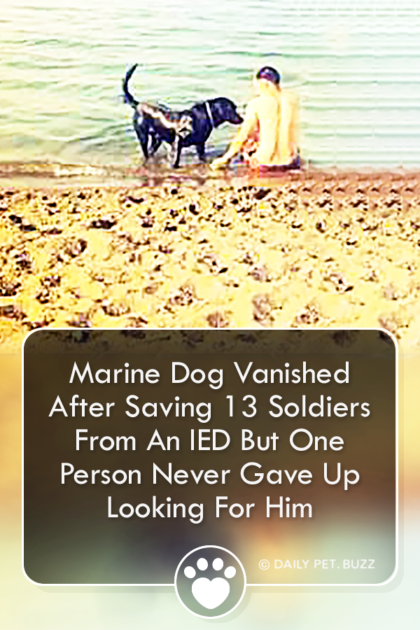 Marine Dog Vanished After Saving 13 Soldiers From An IED But One Person Never Gave Up Looking For Him