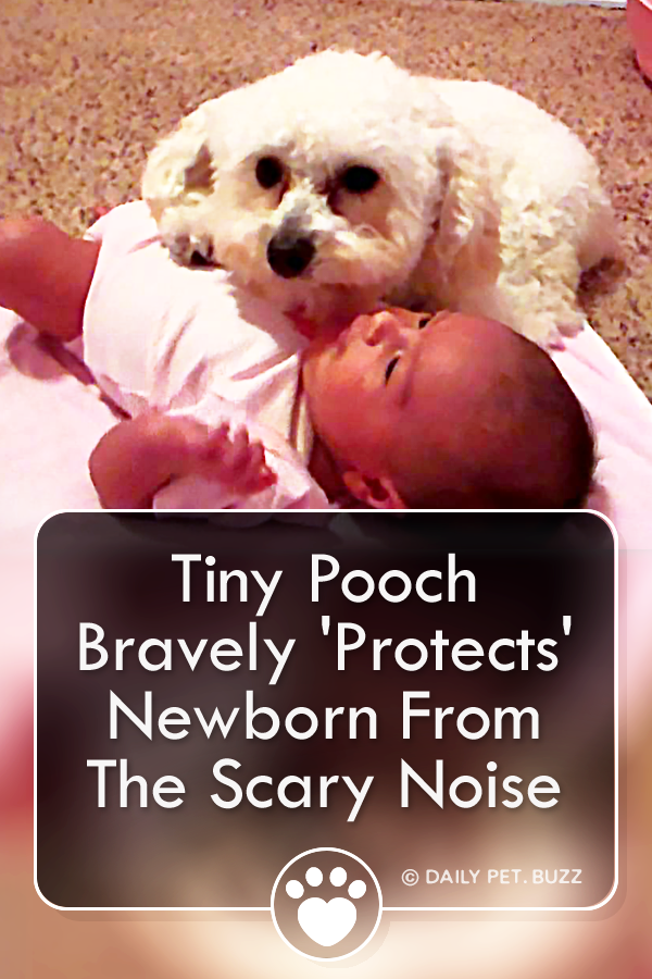 Tiny Pooch Bravely \'Protects\' Newborn From The Scary Noise
