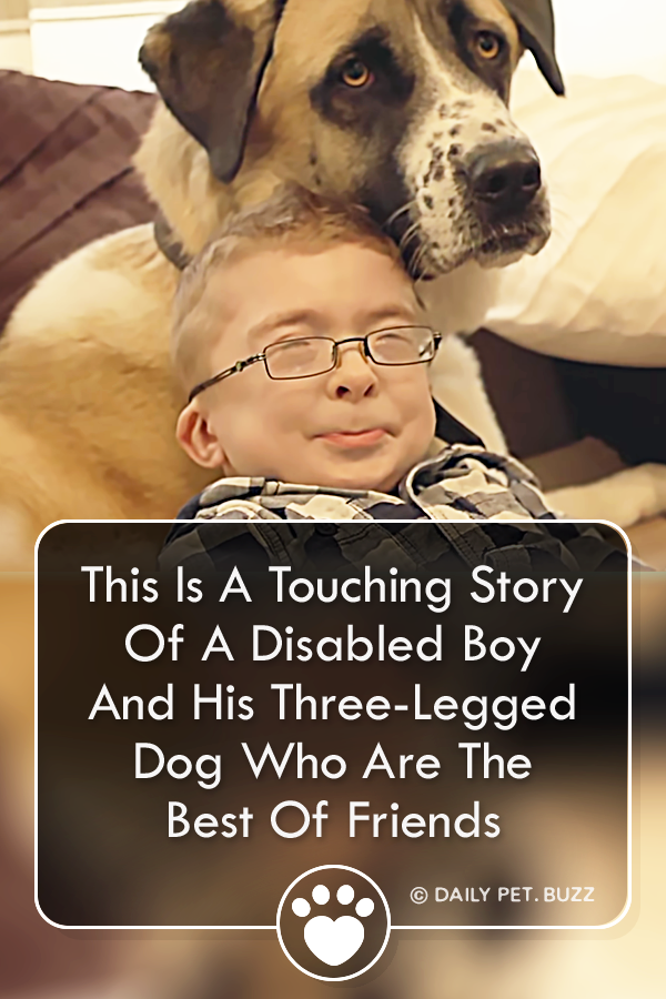 This Is A Touching Story Of A Disabled Boy And His Three-Legged Dog Who Are The Best Of Friends