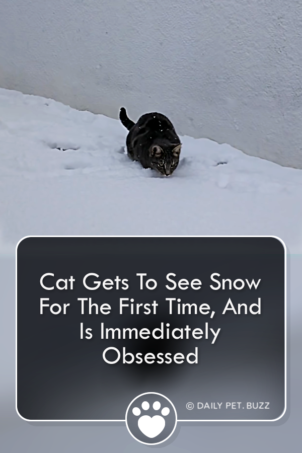 Cat Gets To See Snow For The First Time, And Is Immediately Obsessed