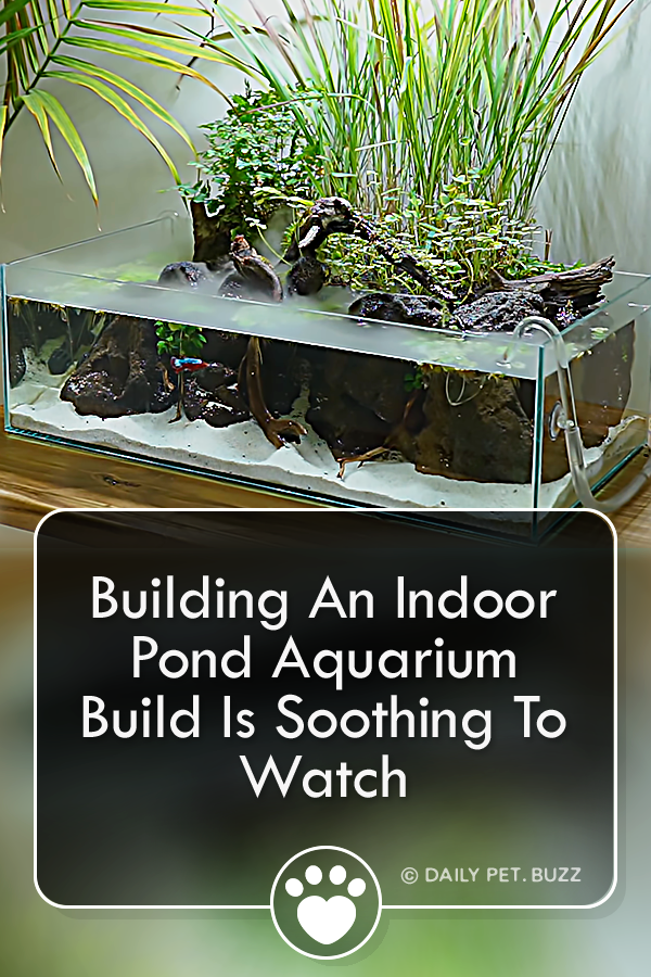 Building An Indoor Pond Aquarium Build Is Soothing To Watch