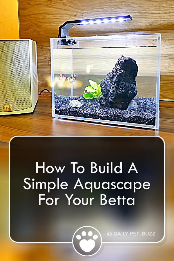 How To Build A Simple Aquascape For Your Betta