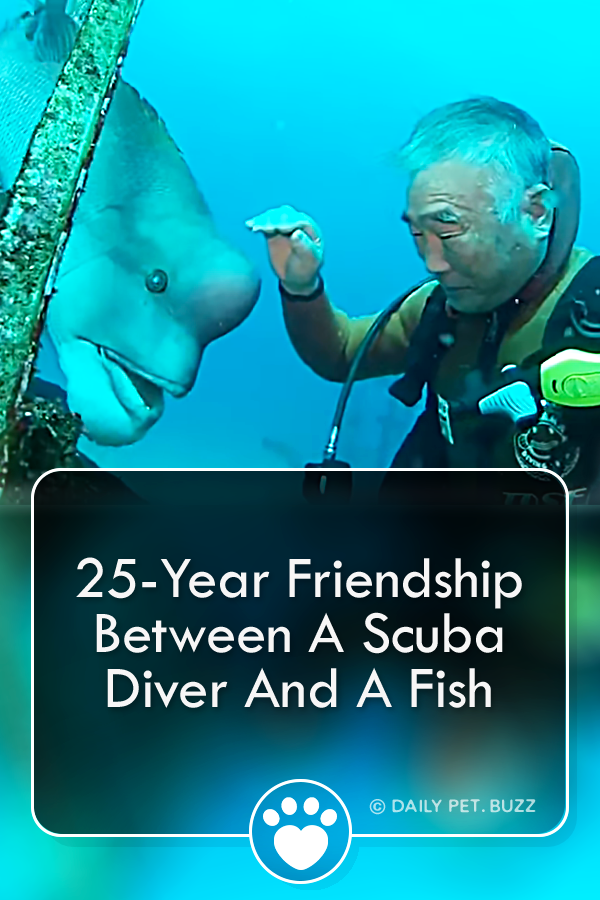 25-Year Friendship Between A Scuba Diver And A Fish