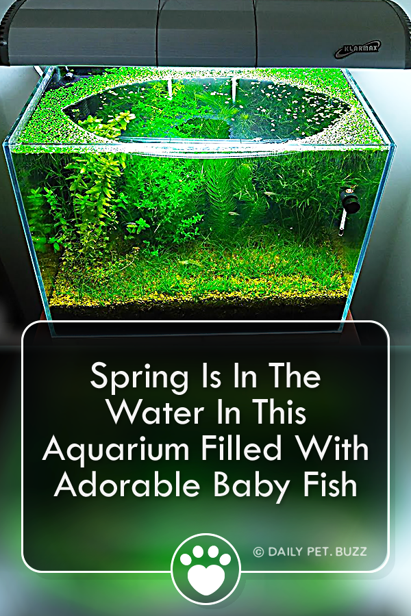 Spring Is In The Water In This Aquarium Filled With Adorable Baby Fish