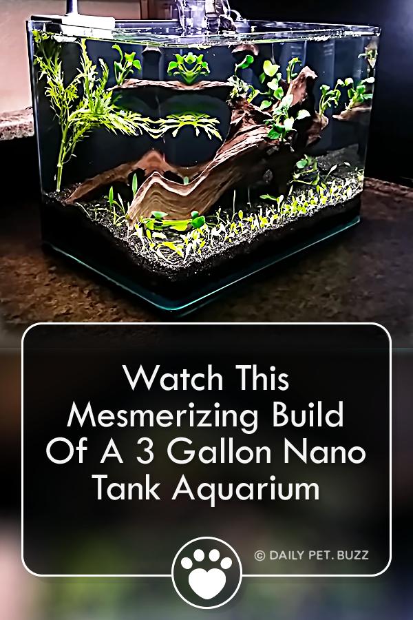 Watch This Mesmerizing Build Of A 3 Gallon Nano Tank Aquarium
