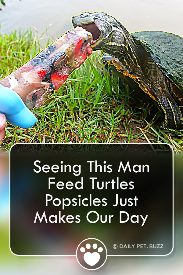 Seeing This Man Feed Turtles Popsicles Just Makes Our Day