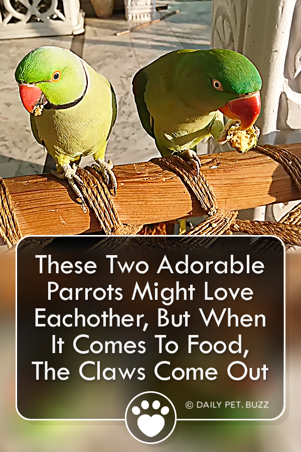 These Two Adorable Parrots Might Love Eachother, But When It Comes To Food, The Claws Come Out