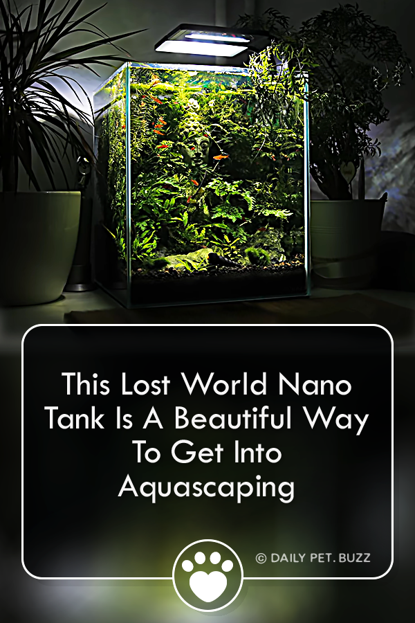 This Lost World Nano Tank Is A Beautiful Way To Get Into Aquascaping