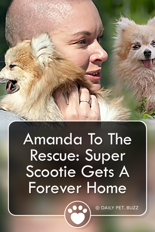 Amanda To The Rescue: Super Scootie Gets A Forever Home