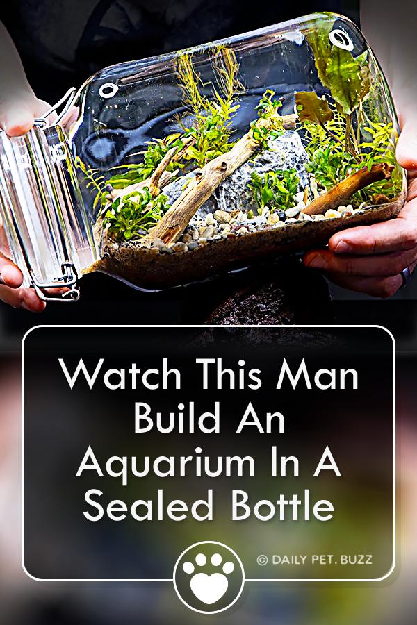 Watch This Man Build An Aquarium In A Sealed Bottle