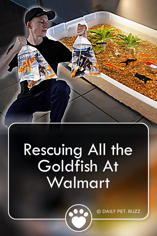 Rescuing All the Goldfish At Walmart