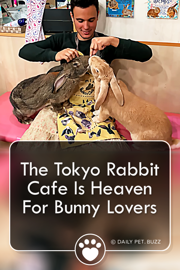 The Tokyo Rabbit Cafe Is Heaven For Bunny Lovers