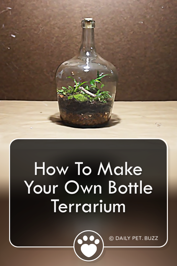 How To Make Your Own Bottle Terrarium