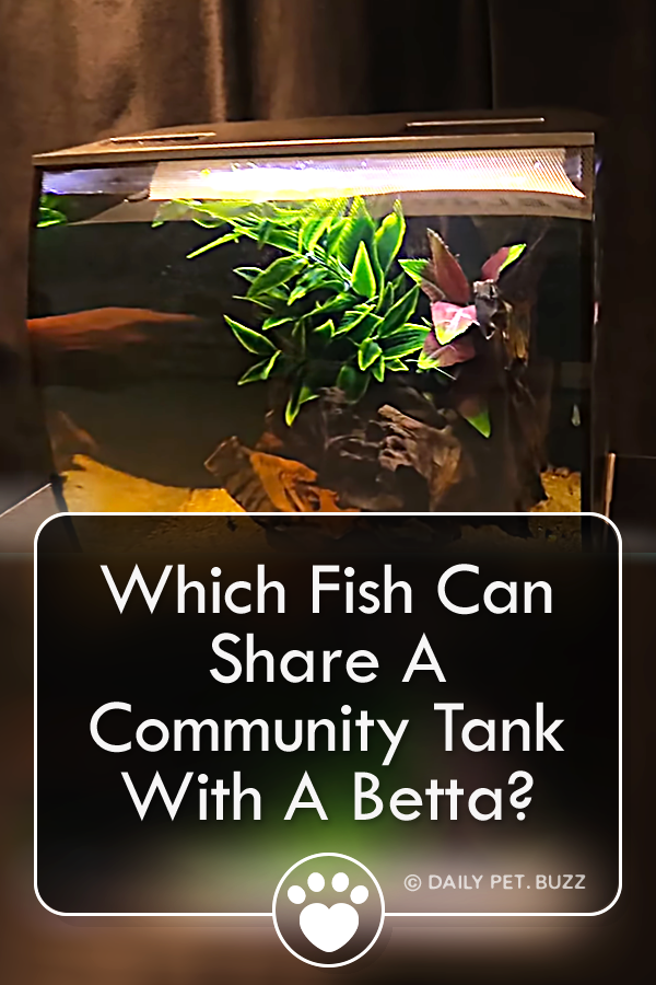 Which Fish Can Share A Community Tank With A Betta?