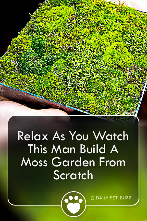 Relax As You Watch This Man Build A Moss Garden From Scratch