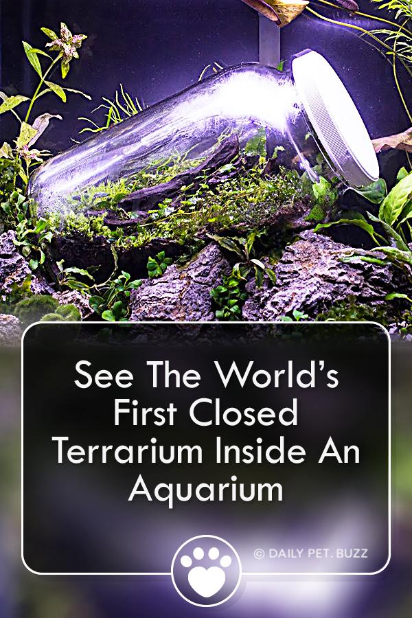 See The World's First Closed Terrarium Inside An Aquarium