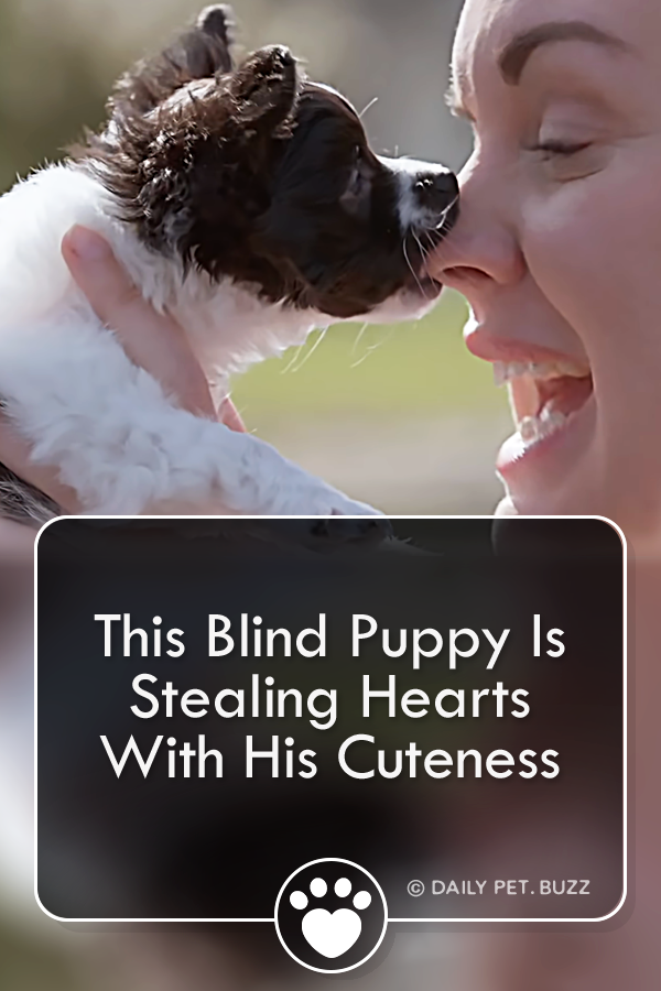 This Blind Puppy Is Stealing Hearts With His Cuteness