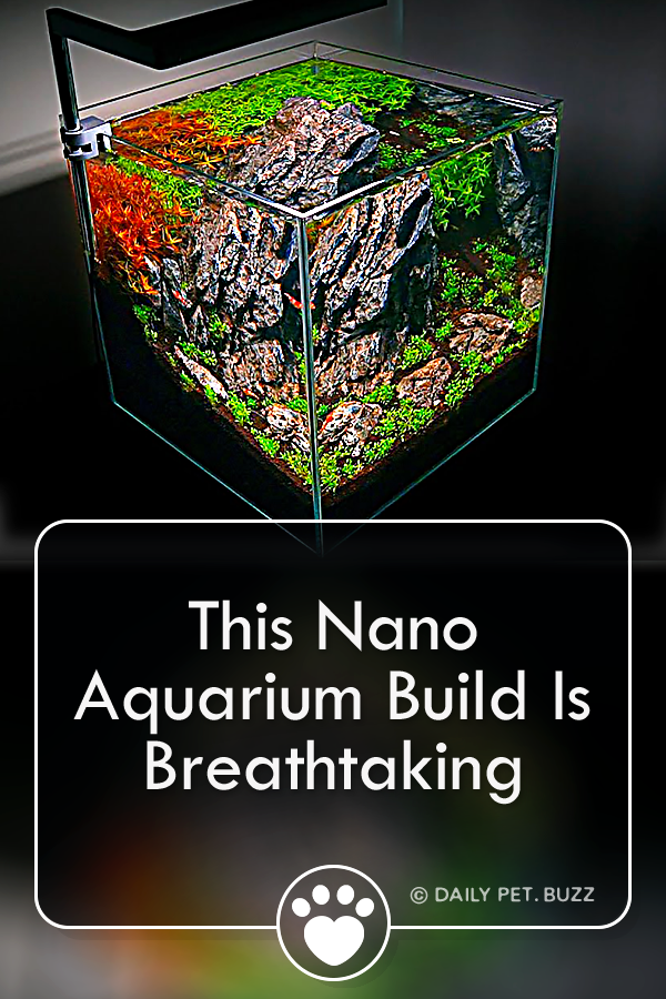 This Nano Aquarium Build Is Breathtaking