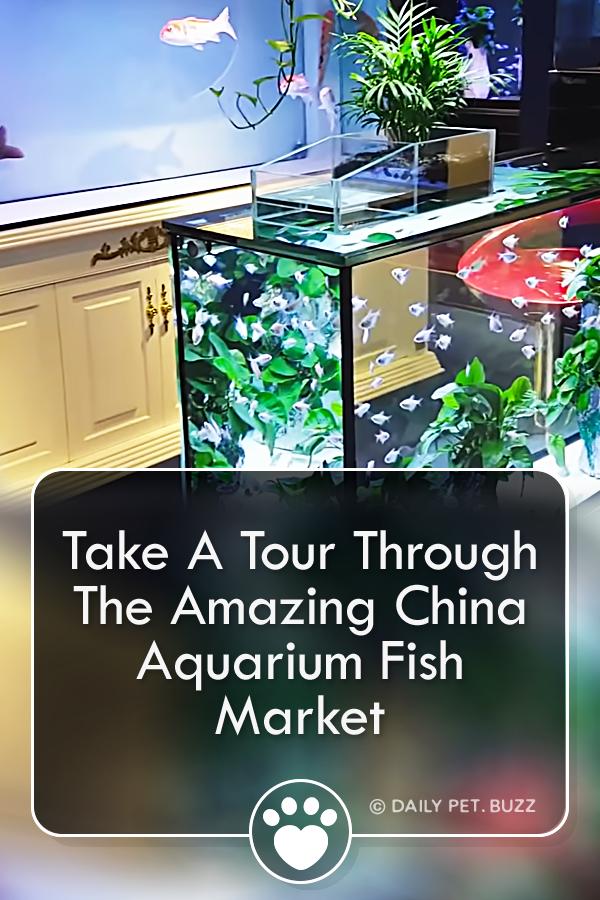 Take A Tour Through The Amazing China Aquarium Fish Market