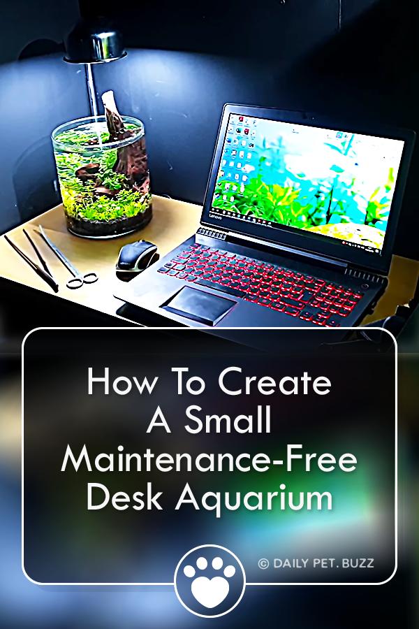 How To Create A Small Maintenance-Free Desk Aquarium