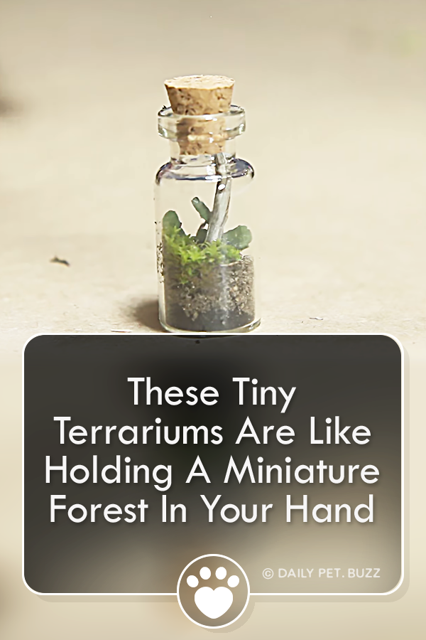 These Tiny Terrariums Are Like Holding A Miniature Forest In Your Hand