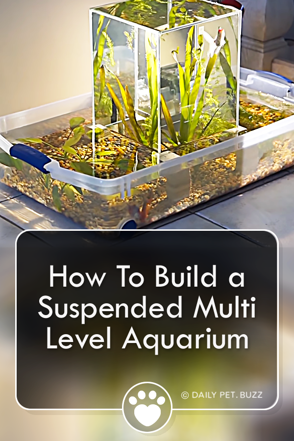 How To Build a Suspended Multi Level Aquarium