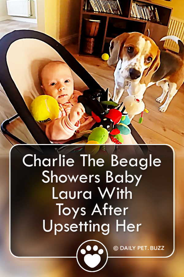 Charlie The Beagle Showers Baby Laura With Toys After Upsetting Her