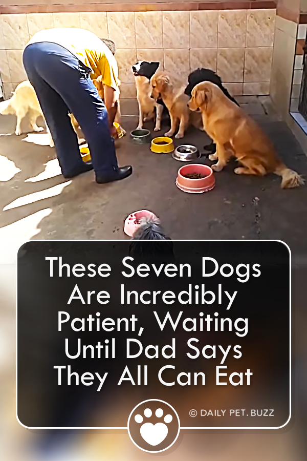 These Seven Dogs Are Incredibly Patient, Waiting Until Dad Says They All Can Eat