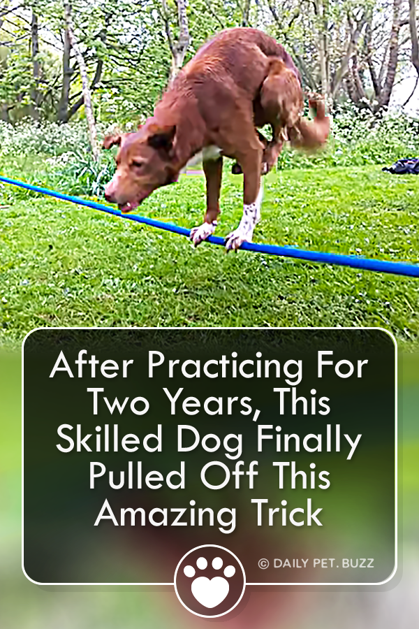 After Practicing For Two Years, This Skilled Dog Finally Pulled Off This Amazing Trick