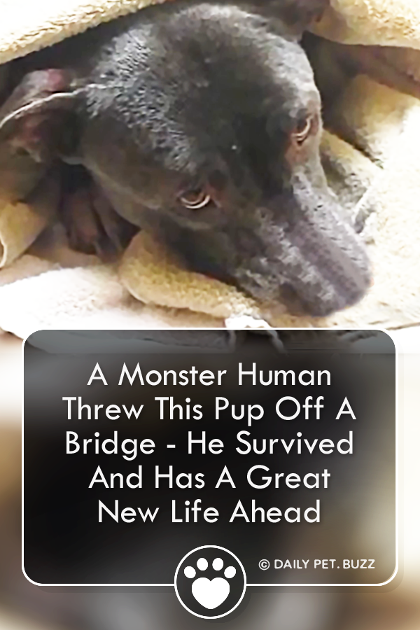 A Monster Human Threw This Pup Off A Bridge - He Survived And Has A Great New Life Ahead
